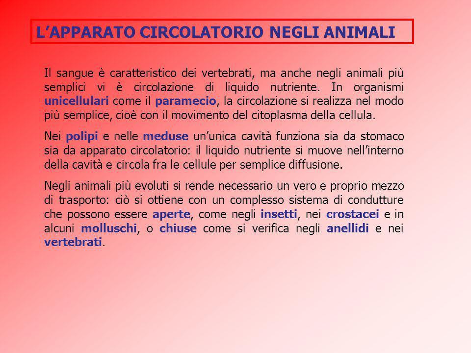 LAPPARATO CIRCOLATORIO NEGLI ANIMALI Il sangue è caratteristico dei vertebrati, ma anche negli animali più semplici vi è circolazione di liquido nutri