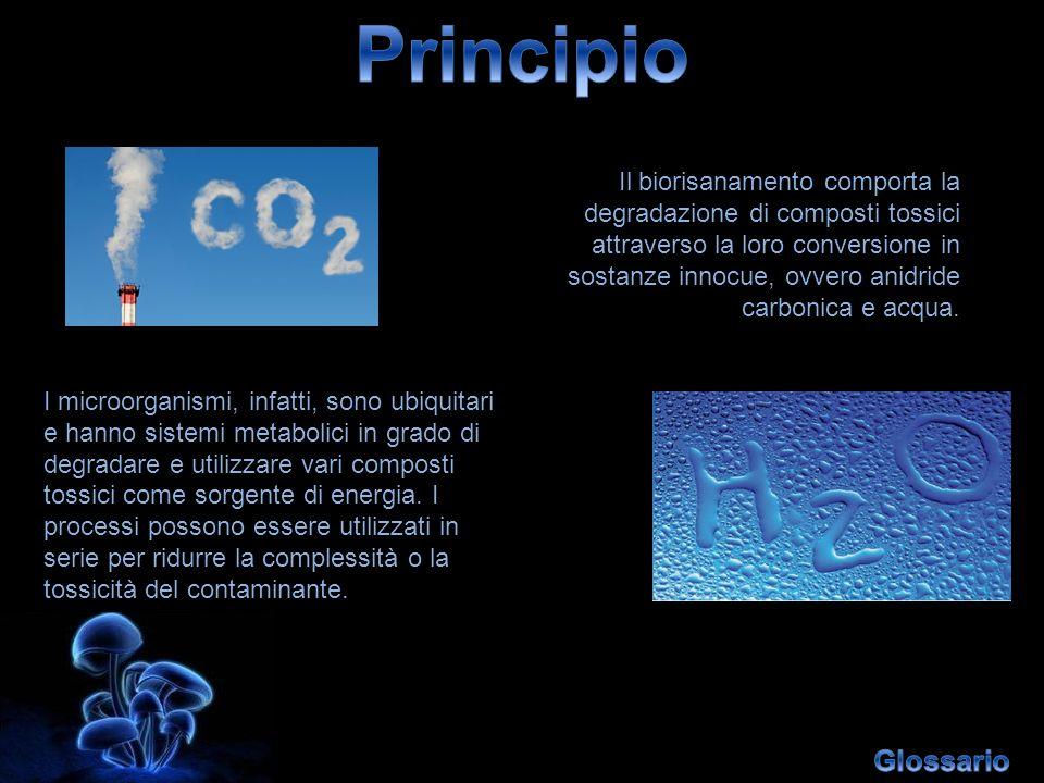 Il biorisanamento comporta la degradazione di composti tossici attraverso la loro conversione in sostanze innocue, ovvero anidride carbonica e acqua.