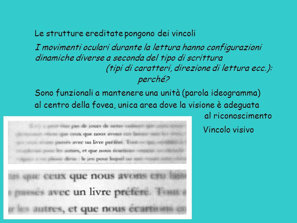 Le strutture ereditate pongono dei vincoli I movimenti oculari durante la lettura hanno configurazioni dinamiche diverse a seconda del tipo di scrittu
