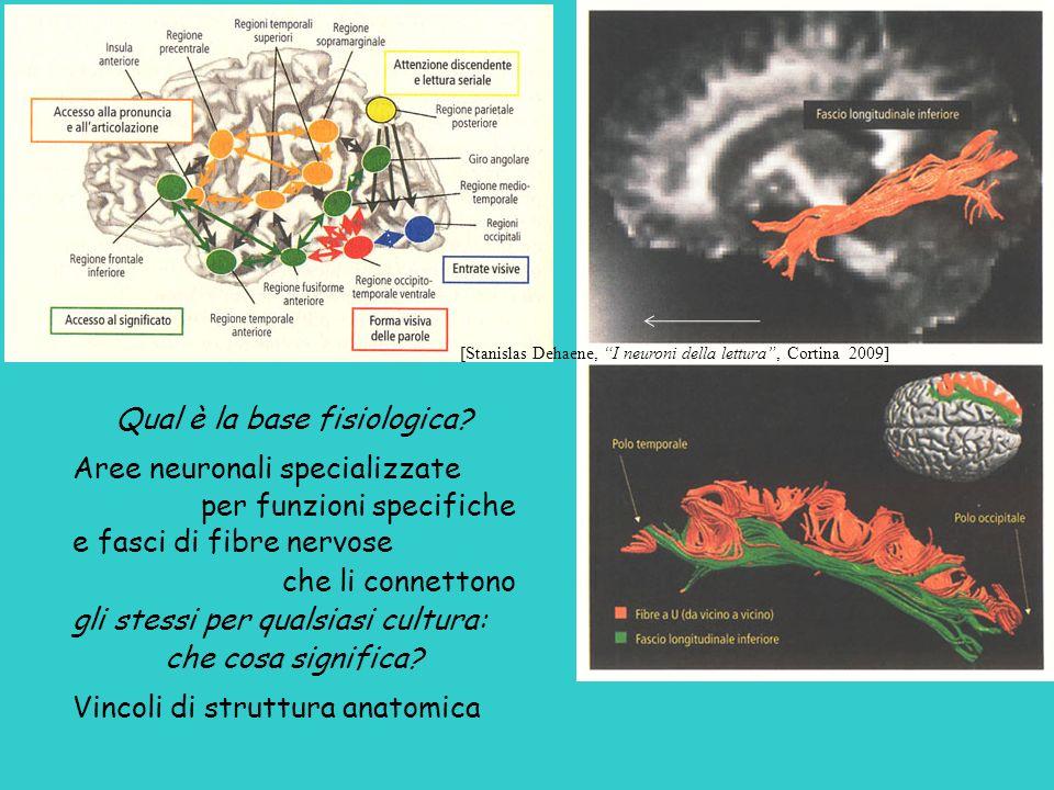 Qual è la base fisiologica? Aree neuronali specializzate per funzioni specifiche e fasci di fibre nervose che li connettono gli stessi per qualsiasi c