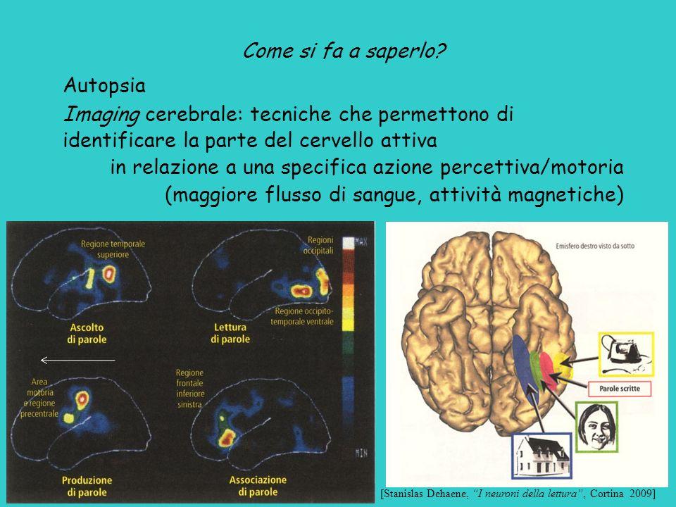 Come si fa a saperlo? Autopsia Imaging cerebrale: tecniche che permettono di identificare la parte del cervello attiva in relazione a una specifica az