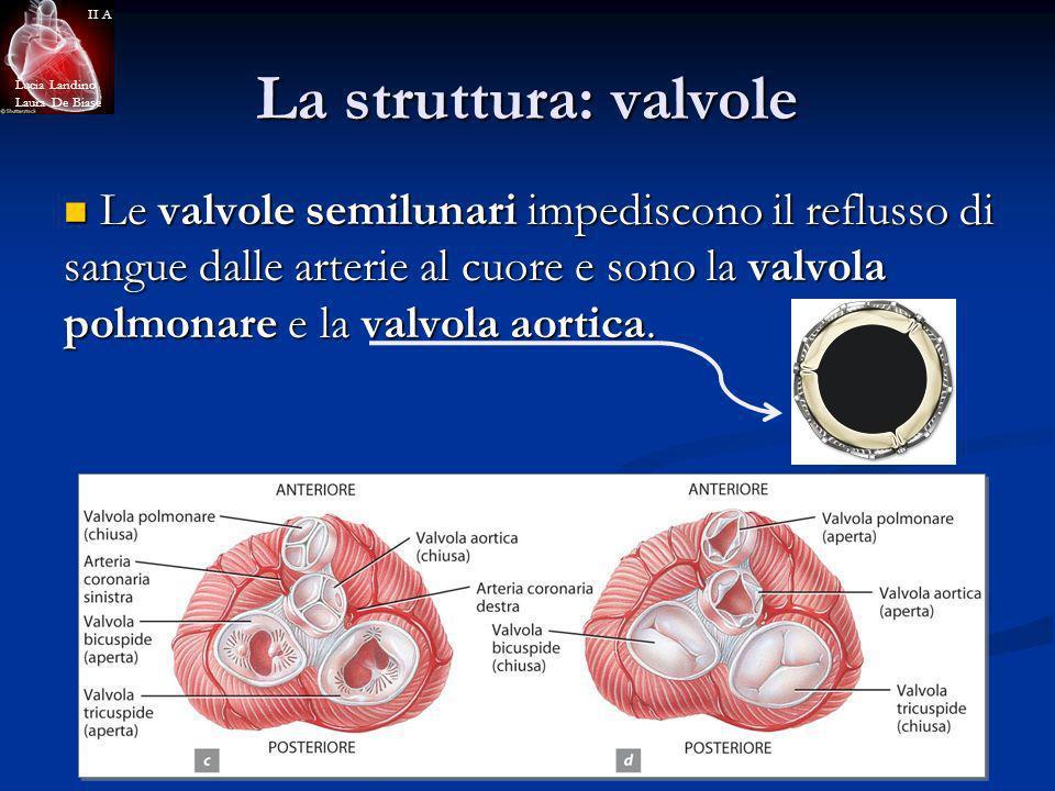 La struttura: valvole Le valvole semilunari impediscono il reflusso di sangue dalle arterie al cuore e sono la valvola polmonare e la valvola aortica.