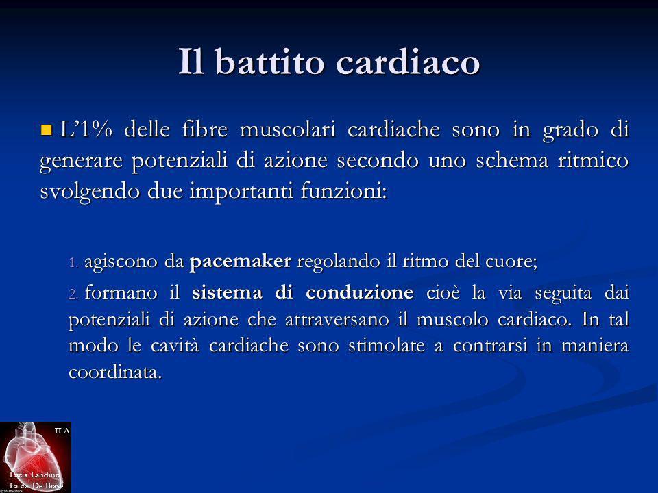 Il battito cardiaco L1% delle fibre muscolari cardiache sono in grado di generare potenziali di azione secondo uno schema ritmico svolgendo due import