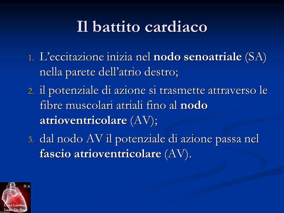 Il battito cardiaco 1. Leccitazione inizia nel nodo senoatriale (SA) nella parete dellatrio destro; 2. il potenziale di azione si trasmette attraverso