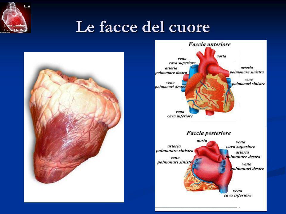 Le facce del cuore Lucia Landino Laura De Biase II A