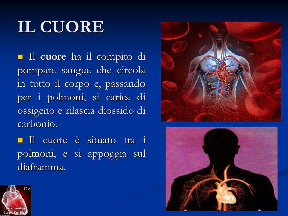 IL CUORE Il cuore ha il compito di pompare sangue che circola in tutto il corpo e, passando per i polmoni, si carica di ossigeno e rilascia diossido d