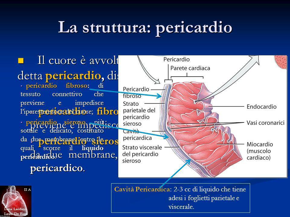 La struttura: pericardio Il cuore è avvolto da una membrana protettiva detta pericardio, distinta in: Il cuore è avvolto da una membrana protettiva de