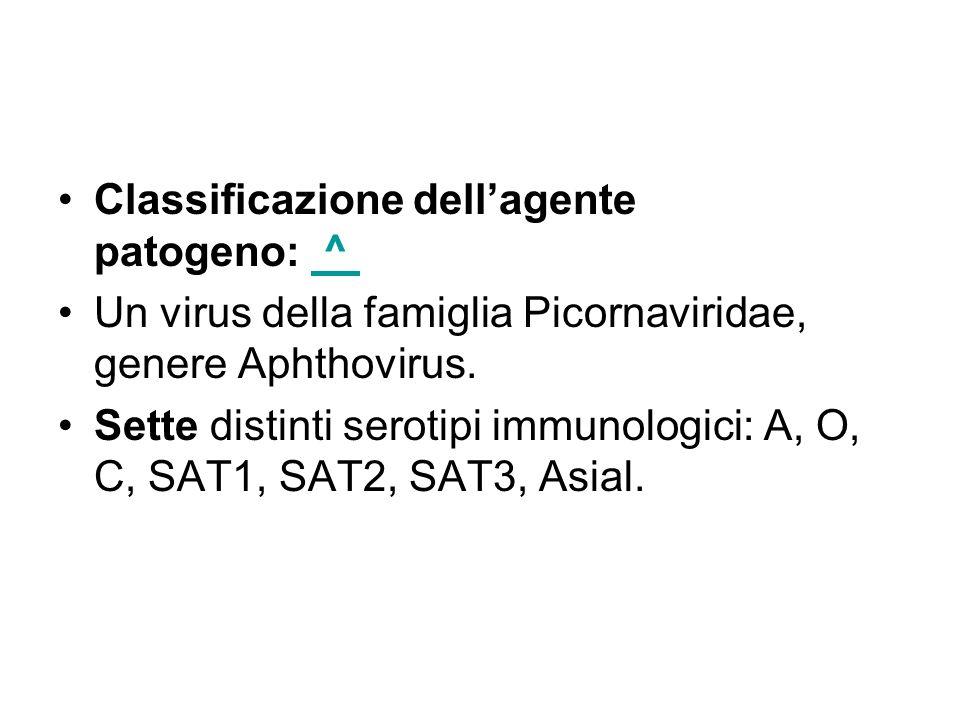 Classificazione dellagente patogeno: ^ ^ Un virus della famiglia Picornaviridae, genere Aphthovirus. Sette distinti serotipi immunologici: A, O, C, SA