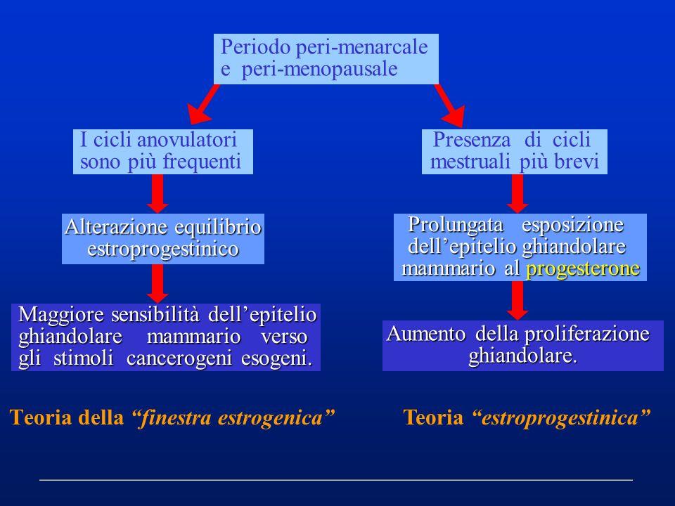 Maggiore sensibilità dellepitelio ghiandolare mammario verso gli stimoli cancerogeni esogeni. Teoria della finestra estrogenica Periodo peri-menarcale