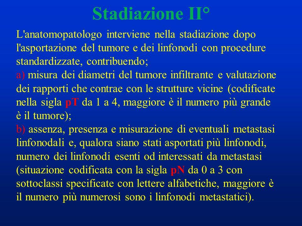 Stadiazione II° L'anatomopatologo interviene nella stadiazione dopo l'asportazione del tumore e dei linfonodi con procedure standardizzate, contribuen