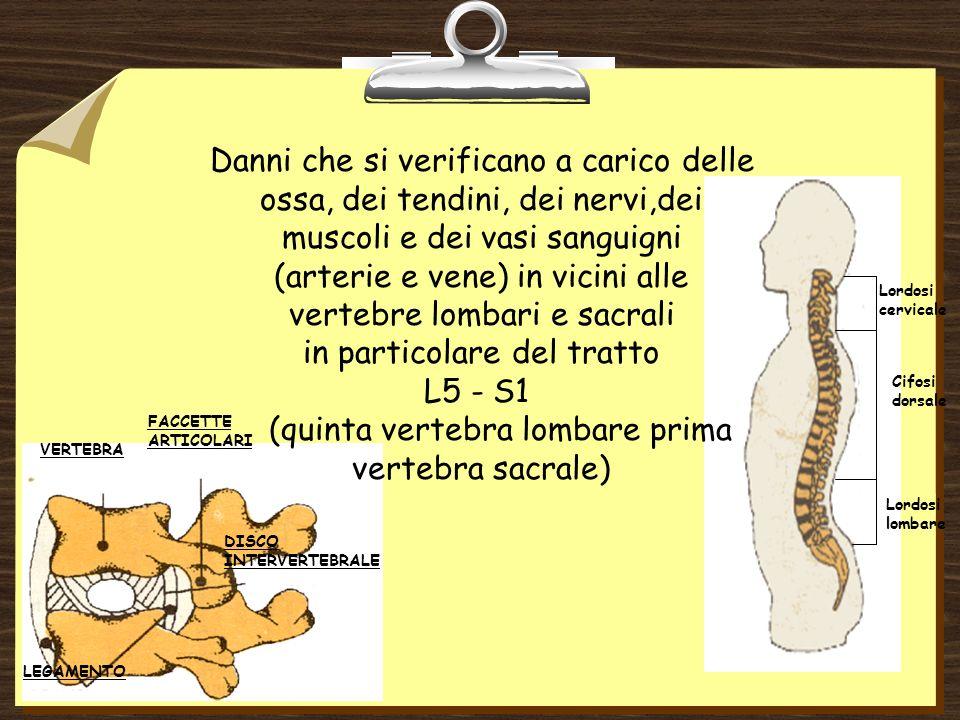 Lordosi lombare Cifosi dorsale Lordosi cervicale VERTEBRA FACCETTE ARTICOLARI DISCO INTERVERTEBRALE LEGAMENTO Danni che si verificano a carico delle ossa, dei tendini, dei nervi,dei muscoli e dei vasi sanguigni (arterie e vene) in vicini alle vertebre lombari e sacrali in particolare del tratto L5 - S1 (quinta vertebra lombare prima vertebra sacrale)