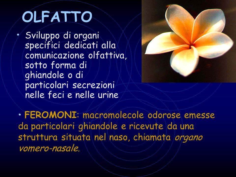 OLFATTO Sviluppo di organi specifici dedicati alla comunicazione olfattiva, sotto forma di ghiandole o di particolari secrezioni nelle feci e nelle urine