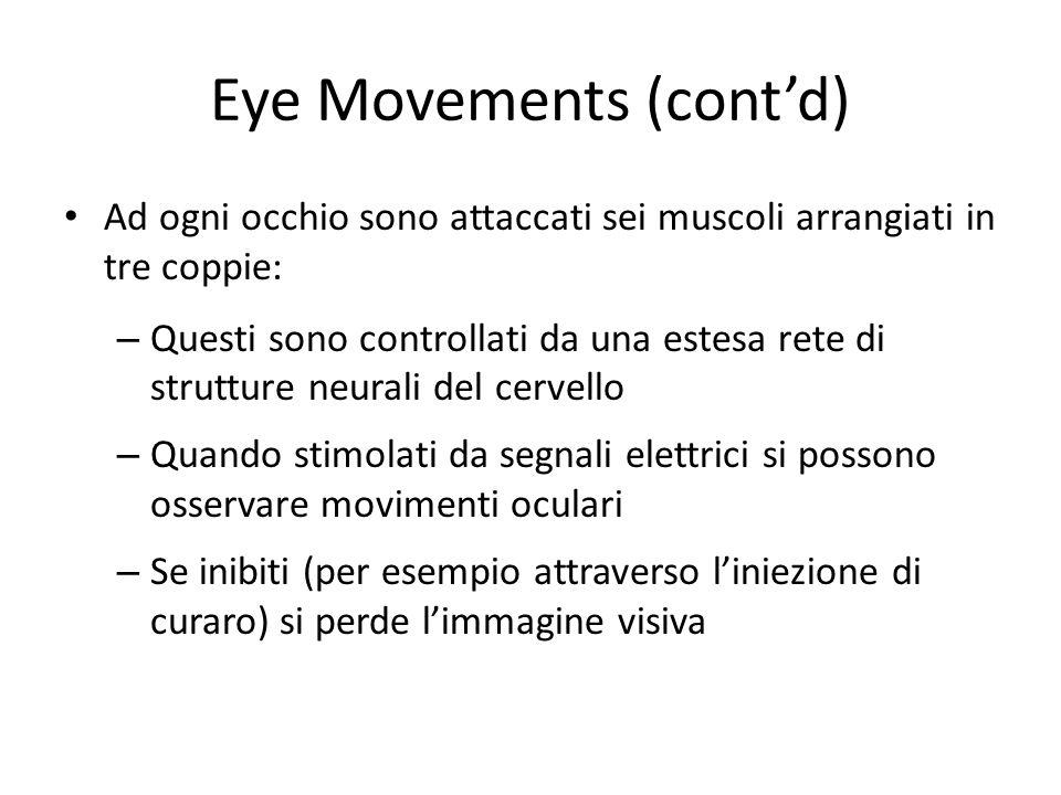 Eye Movements (contd) Ad ogni occhio sono attaccati sei muscoli arrangiati in tre coppie: – Questi sono controllati da una estesa rete di strutture ne