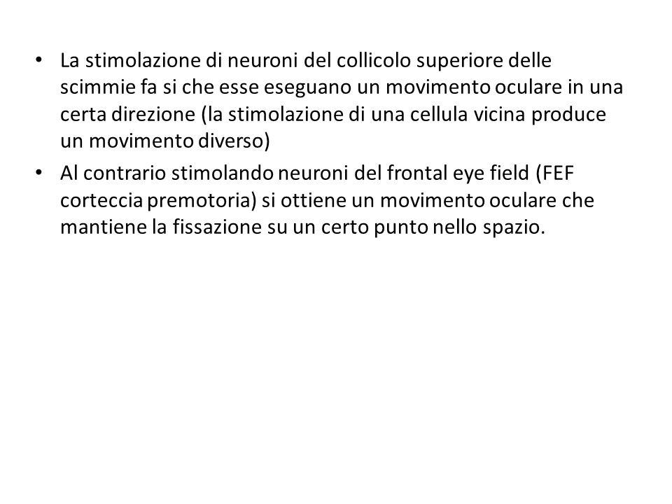 La stimolazione di neuroni del collicolo superiore delle scimmie fa si che esse eseguano un movimento oculare in una certa direzione (la stimolazione