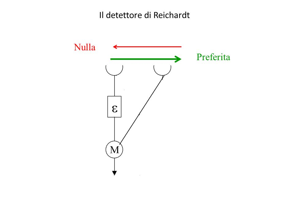 A Neural Circuit for Detection of Rightward Motion (Part 2) Demo