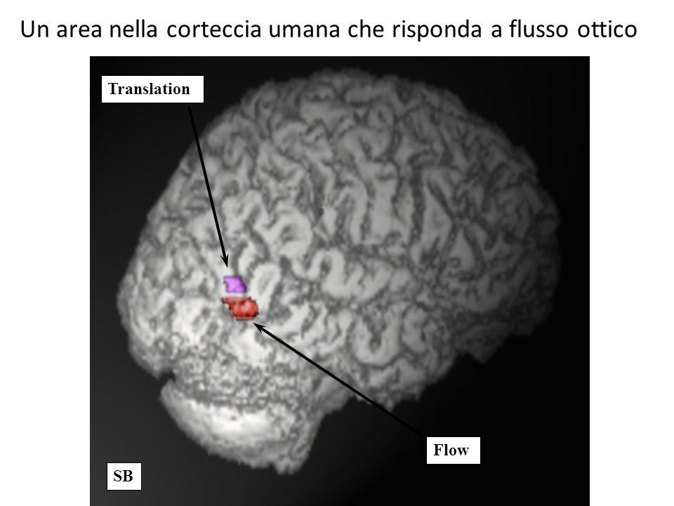 Translation Flow SB Un area nella corteccia umana che risponda a flusso ottico
