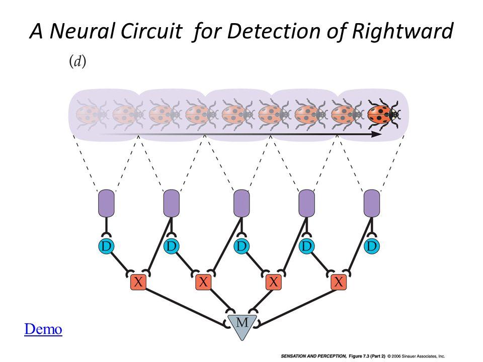 E possibile ottenere semplici detettori di moto attraverso filtri lineari che ritardano linformazione e la integrano fra loro attraverso somme
