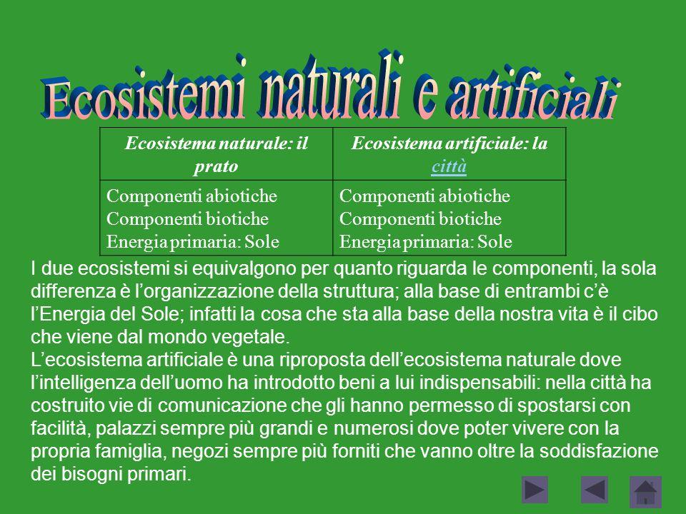 Ecosistema naturale: il prato Ecosistema artificiale: la città città Componenti abiotiche Componenti biotiche Energia primaria: Sole Componenti abioti