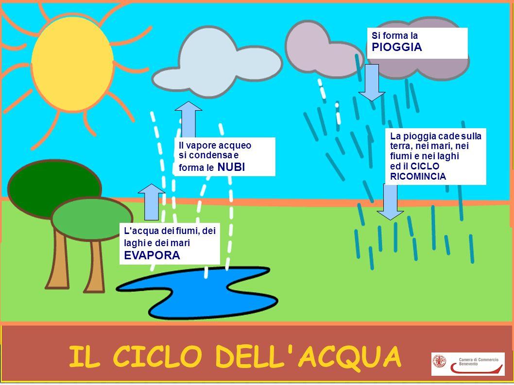 IL CICLO DELL'ACQUA L'acqua dei fiumi, dei laghi e dei mari EVAPORA Il vapore acqueo si condensa e forma le NUBI Si forma la PIOGGIA La pioggia cade s