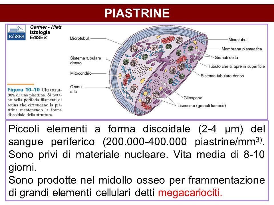 PIASTRINE Piccoli elementi a forma discoidale (2-4 µm) del sangue periferico (200.000-400.000 piastrine/mm 3). Sono privi di materiale nucleare. Vita