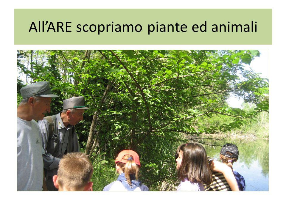 AllARE scopriamo piante ed animali