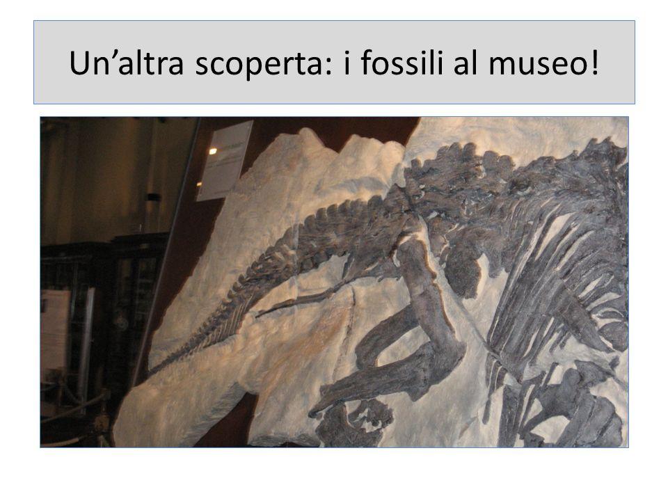 Unaltra scoperta: i fossili al museo!