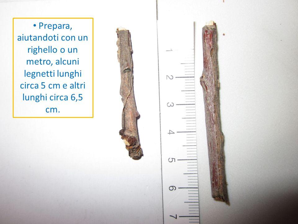 Prepara, aiutandoti con un righello o un metro, alcuni legnetti lunghi circa 5 cm e altri lunghi circa 6,5 cm.