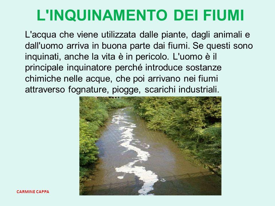 CARMINE CAPPA L INQUINAMENTO DEI FIUMI L acqua che viene utilizzata dalle piante, dagli animali e dall uomo arriva in buona parte dai fiumi.
