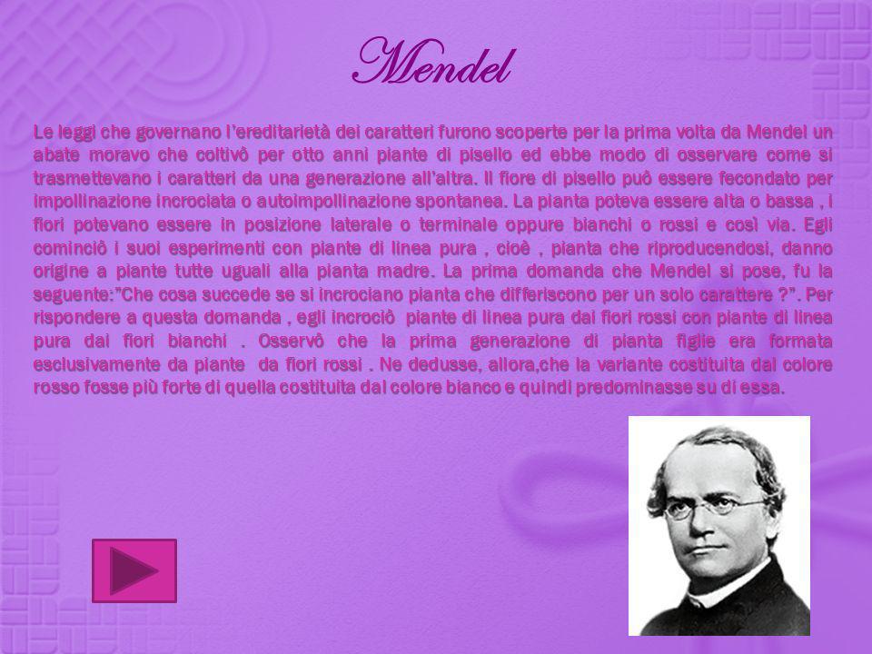 Mendel Le leggi che governano lereditarietà dei caratteri furono scoperte per la prima volta da Mendel un abate moravo che coltivò per otto anni piant