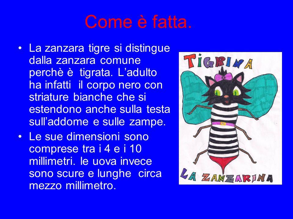 Come è fatta. La zanzara tigre si distingue dalla zanzara comune perchè è tigrata. Ladulto ha infatti il corpo nero con striature bianche che si esten