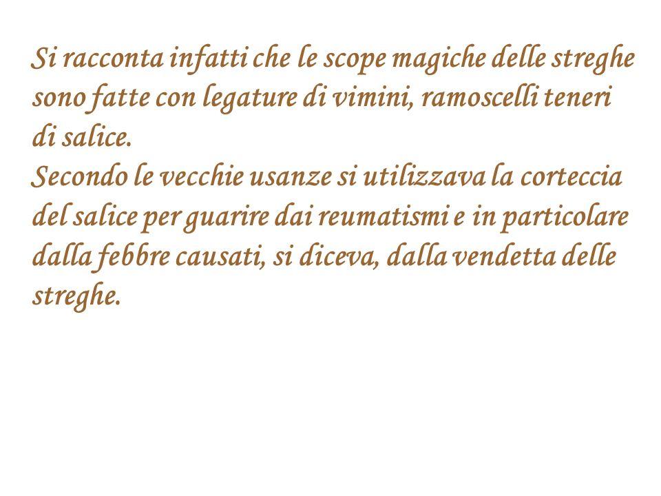 Si racconta infatti che le scope magiche delle streghe sono fatte con legature di vimini, ramoscelli teneri di salice. Secondo le vecchie usanze si ut