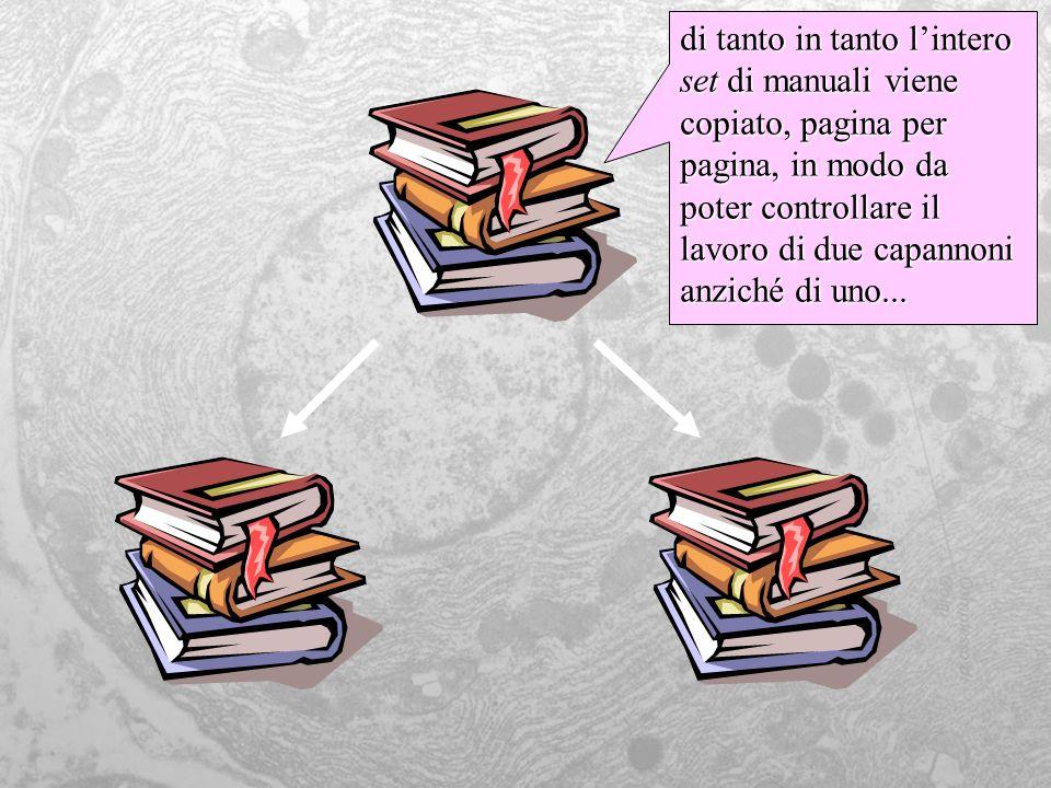 di tanto in tanto lintero set di manuali viene copiato, pagina per pagina, in modo da poter controllare il lavoro di due capannoni anziché di uno...