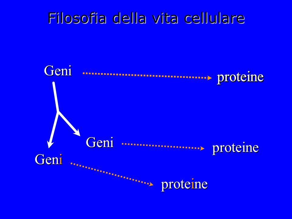 Filosofia della vita cellulare Geni Geni Geni proteine proteine proteineproteineproteine