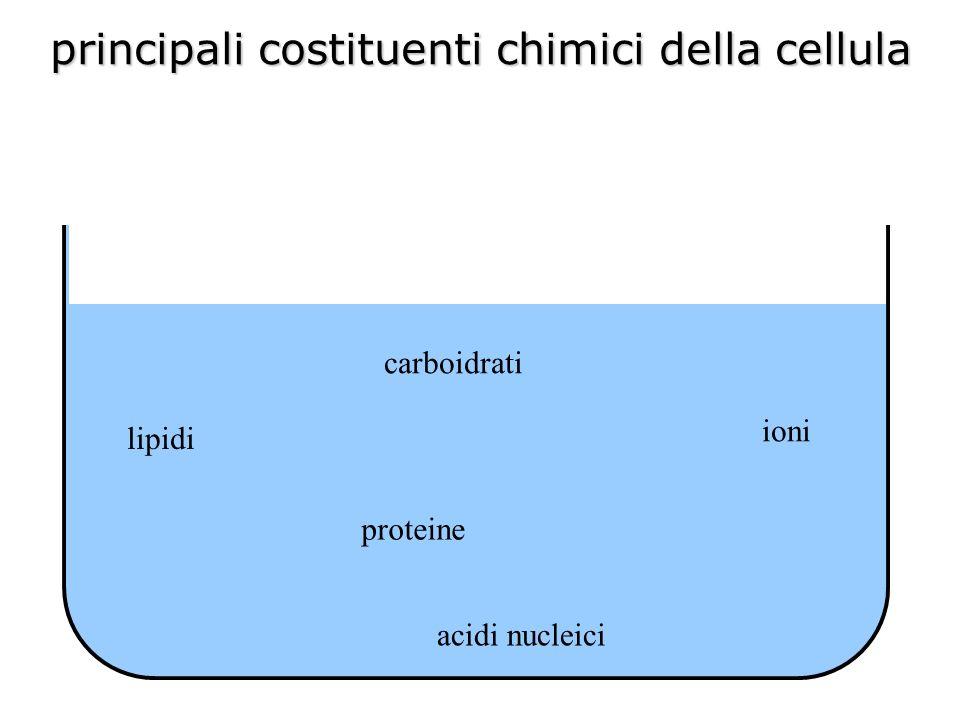 carboidrati lipidi ioni proteine acidi nucleici