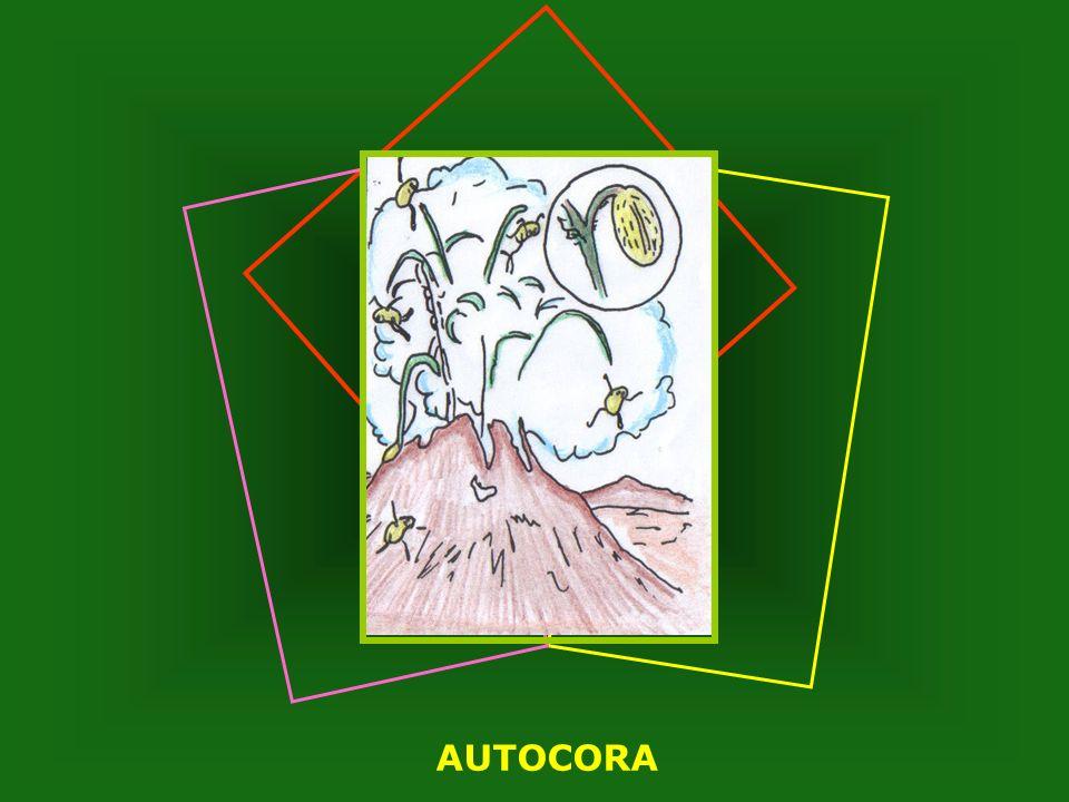 AUTOCORA