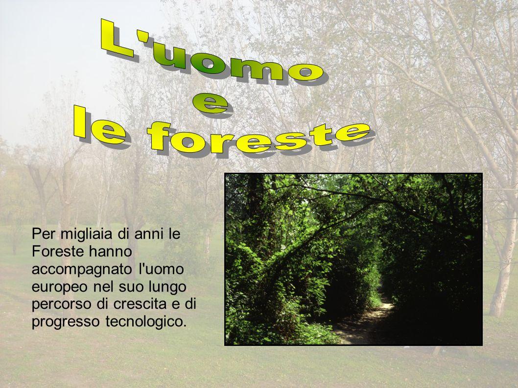 Per migliaia di anni le Foreste hanno accompagnato l uomo europeo nel suo lungo percorso di crescita e di progresso tecnologico.
