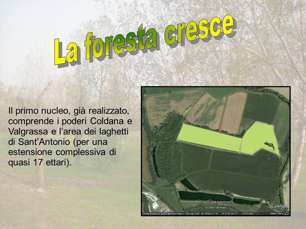 Il primo nucleo, già realizzato, comprende i poderi Coldana e Valgrassa e larea dei laghetti di SantAntonio (per una estensione complessiva di quasi 17 ettari).