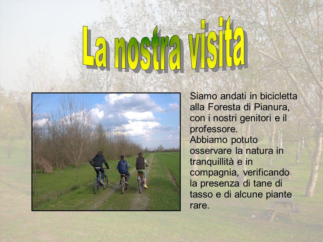 Siamo andati in bicicletta alla Foresta di Pianura, con i nostri genitori e il professore.