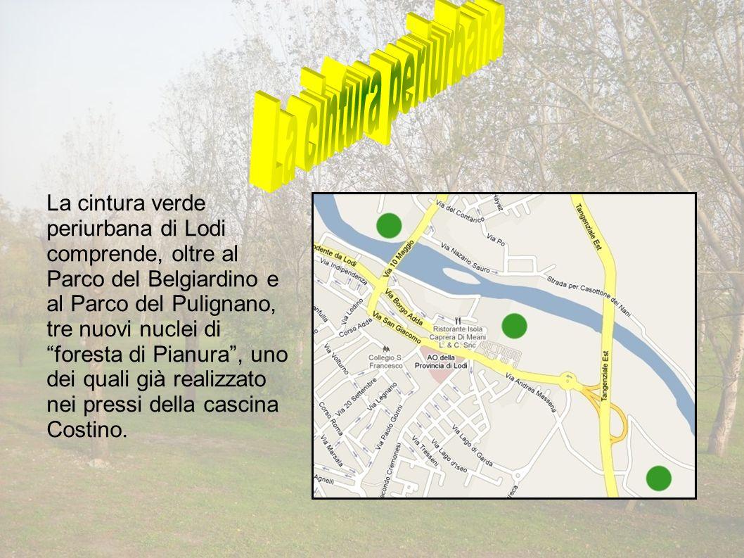 La cintura verde periurbana di Lodi comprende, oltre al Parco del Belgiardino e al Parco del Pulignano, tre nuovi nuclei di foresta di Pianura, uno dei quali già realizzato nei pressi della cascina Costino.
