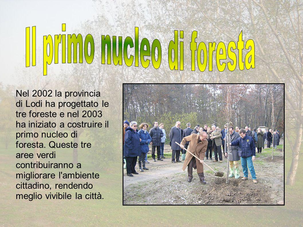 Nel 2002 la provincia di Lodi ha progettato le tre foreste e nel 2003 ha iniziato a costruire il primo nucleo di foresta.