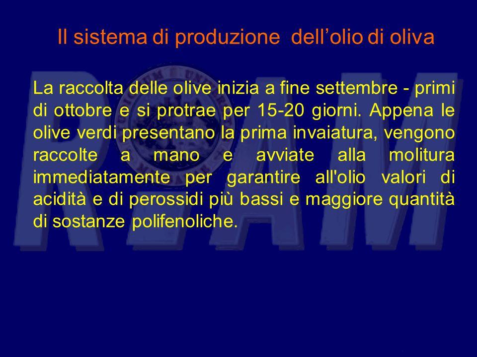 Il sistema di produzione dellolio di oliva La raccolta delle olive inizia a fine settembre - primi di ottobre e si protrae per 15-20 giorni. Appena le