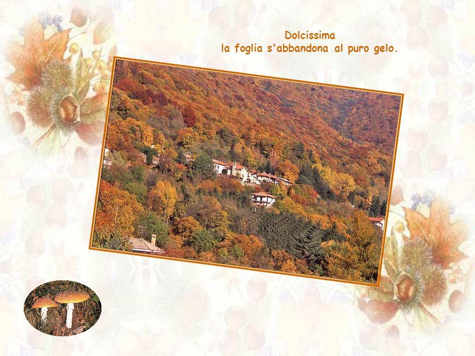 Nel calmo languore della fine, l'autunno s'immedesima.