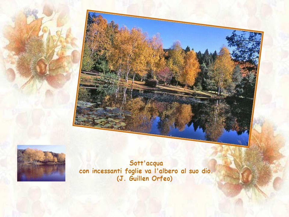 Sott acqua con incessanti foglie va l albero al suo dio. (J. Guillen Orfeo)