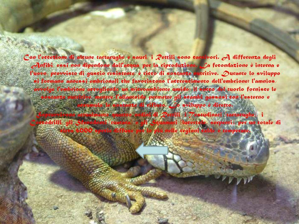 I rettili. I Rettili, comparsi circa 350 milioni di anni fa, sono risultati più idonei degli Anfibi a colonizzare gli ambienti terrestri, poiché forni