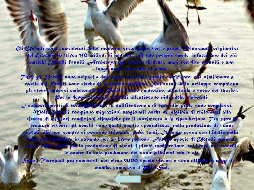Gli uccelli. Gli Uccelli sono, tra i Vertebrati, i meglio adattati al volo. In modo tipico, hanno pelle fornita di penne che costituiscono un rivestim