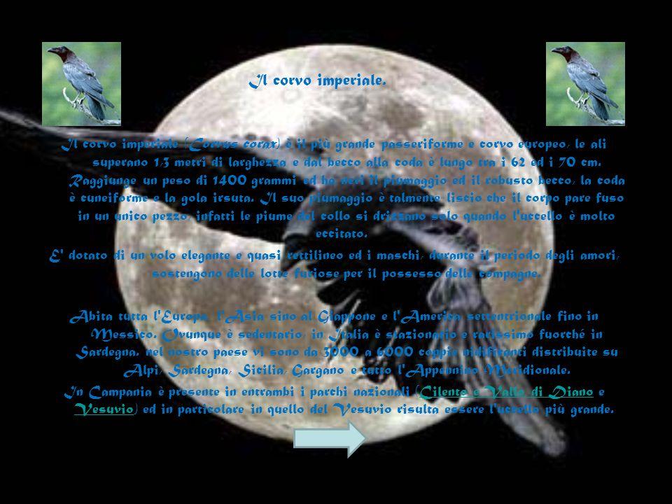 Gli Uccelli sono considerati dalla moderna sistematica veri e propri Dinosauri, originatisi nel Giurassico (circa 150 milioni di anni fa). A tale peri