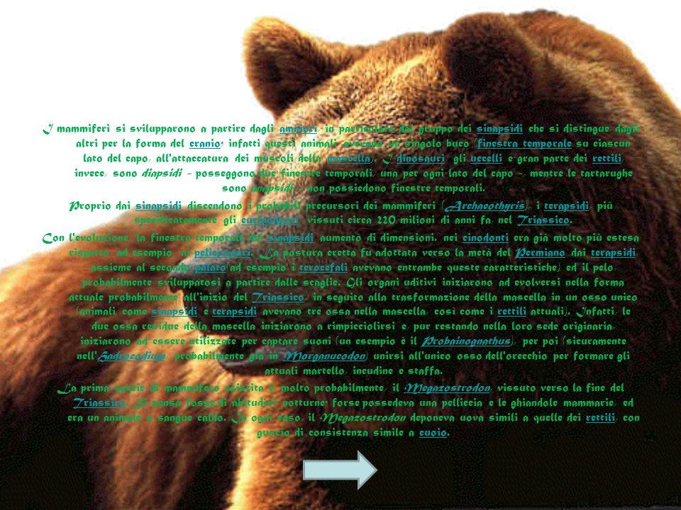 I mammiferi. I Mammiferi sono dotati di varie caratteristiche comuni che consentono di separarli dalle altre classi animali: Le caretteristiche fondam