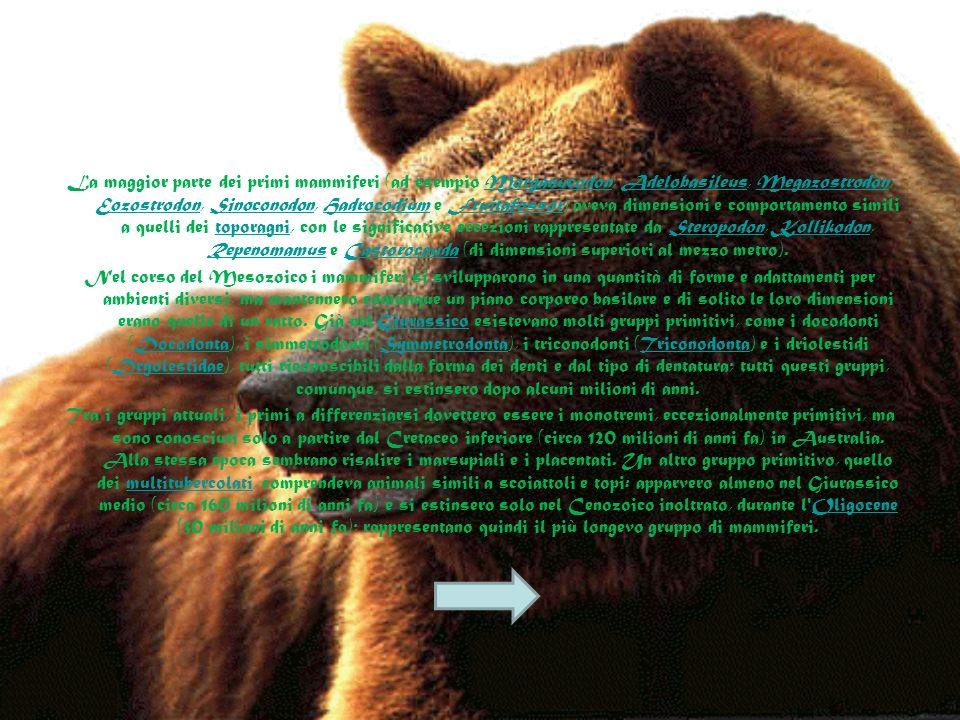 I mammiferi si svilupparono a partire dagli amnioti, in particolare dal gruppo dei sinapsidi che si distingue dagli altri per la forma del cranio; inf