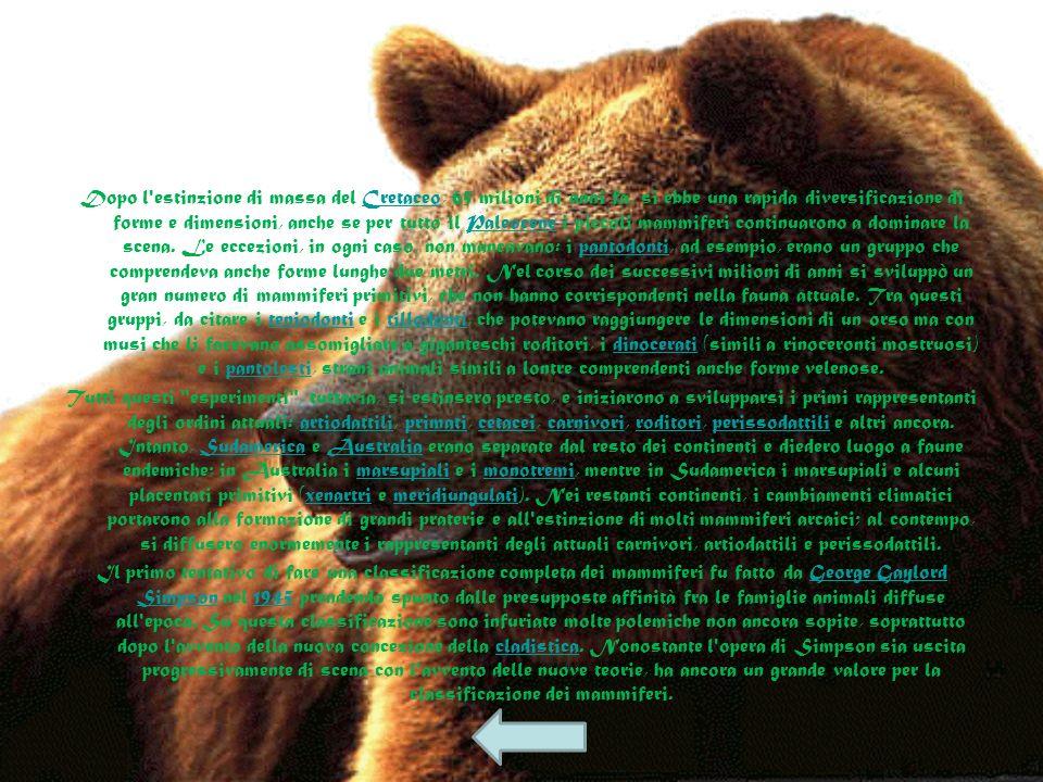 La maggior parte dei primi mammiferi (ad esempio Morganucodon, Adelobasileus, Megazostrodon, Eozostrodon, Sinoconodon, Hadrocodium e Fruitafossor) ave