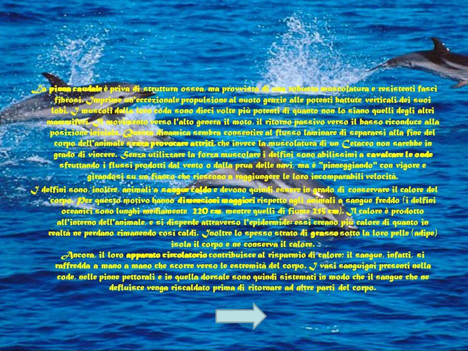 Il corpo di un delfino, o di un qualsiasi altro Cetaceo, si presenta estremamente idrodinamico, in modo da consentirgli di nuotare agilmente. La pelle